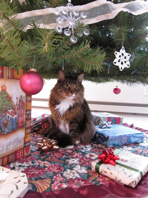 Emeril under the christmas tree