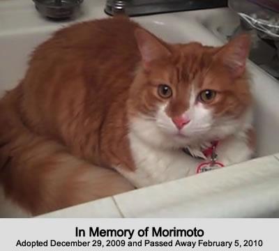 In Memory of Morimoto