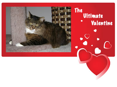 Emeril is my valentine