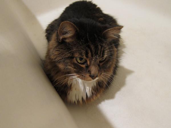 Emeril in the bath tub
