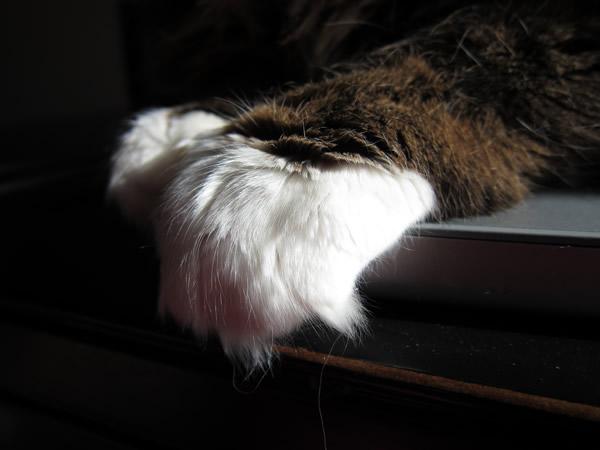 Emeril's paw
