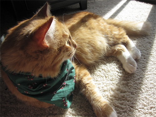 max in his Christmas scarf