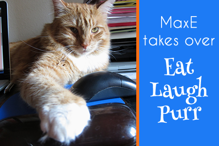 Max takes over Eat Laugh Purr