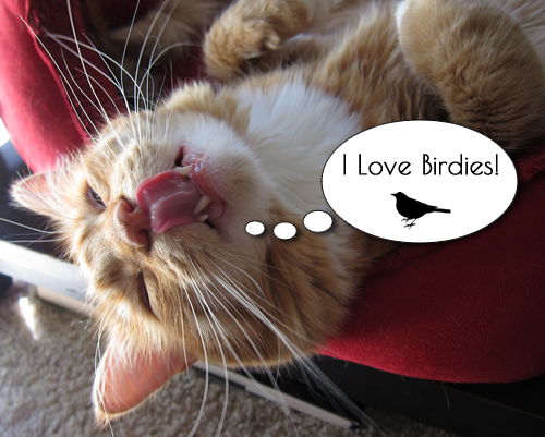 I love birdies!
