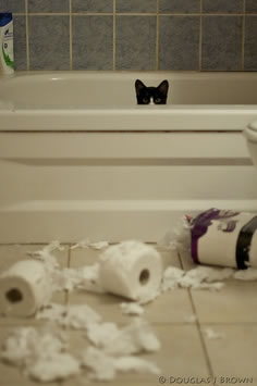 cat in bathtub with toilet paper scattered around