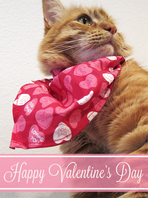 Max in his Valentine's Day Scarf