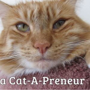 Max is a cat-a-preneur!
