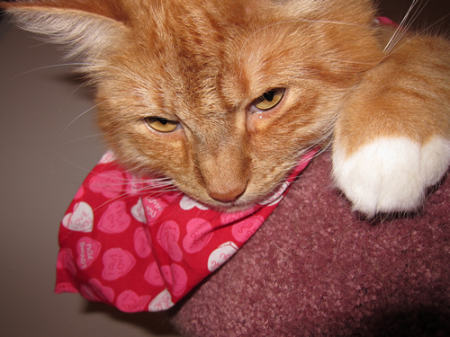 max in his scarf