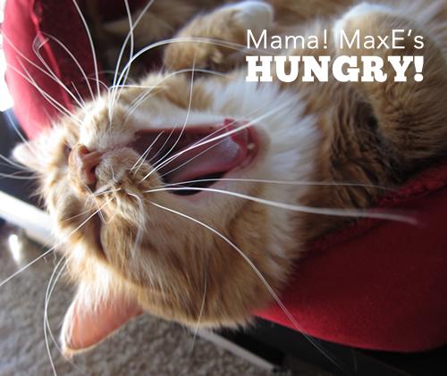 Mama! MaxE's HUNGRY