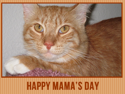 Happy Mama's Day
