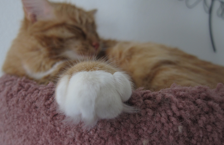 Max - talk to the paw!