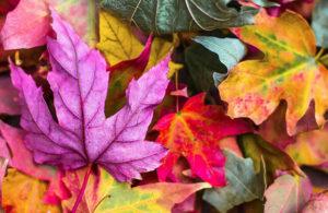 An October Recap